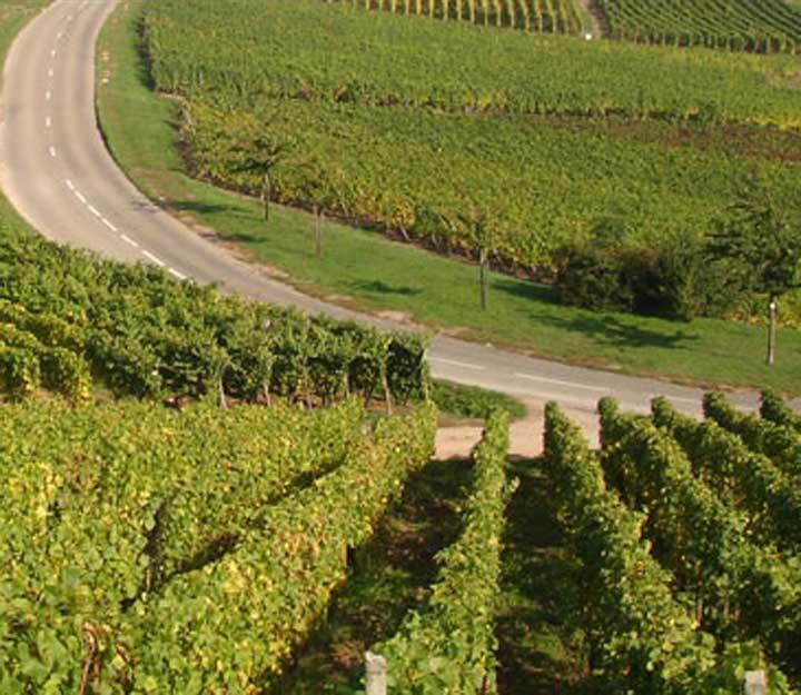 Le domaine Vin d'Alsace Baur - Turckheim